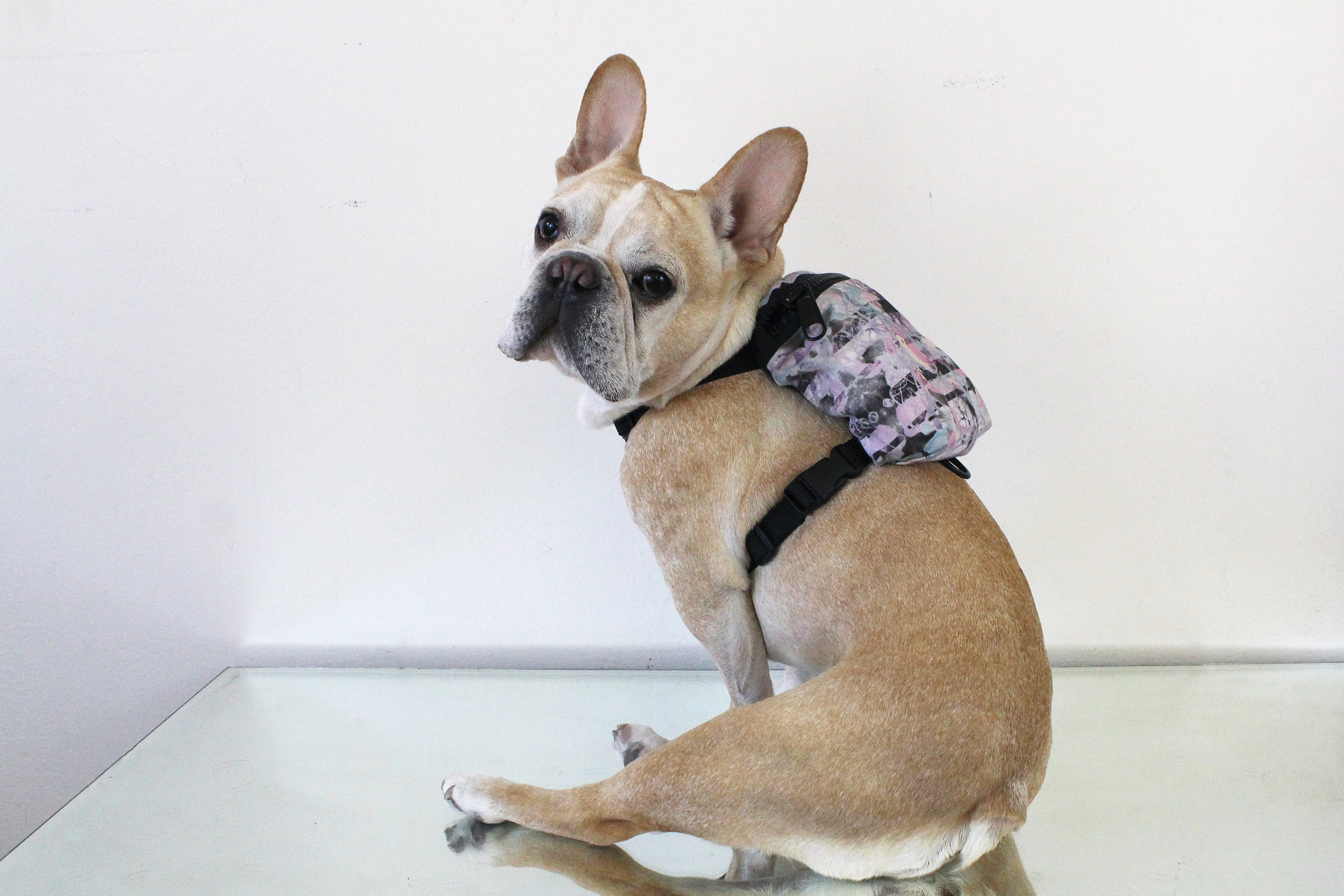 Today in Micro Fashion: Dog Backpacks